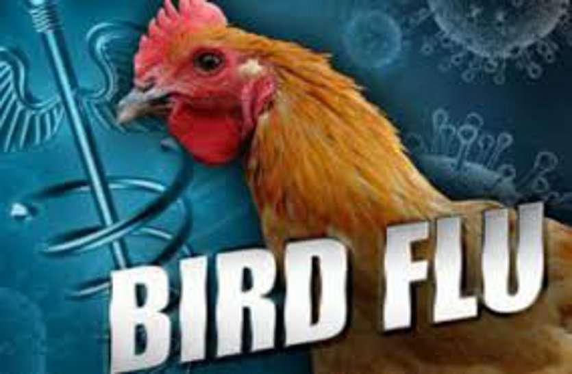 छत्तीसगढ़ में बर्ड फ्लू की पुष्टि, बालोद जिले के पोल्ट्री फॉर्म के मुर्गियों की रिपोर्ट आई पॉजिटिव, अलर्ट पर सरकार