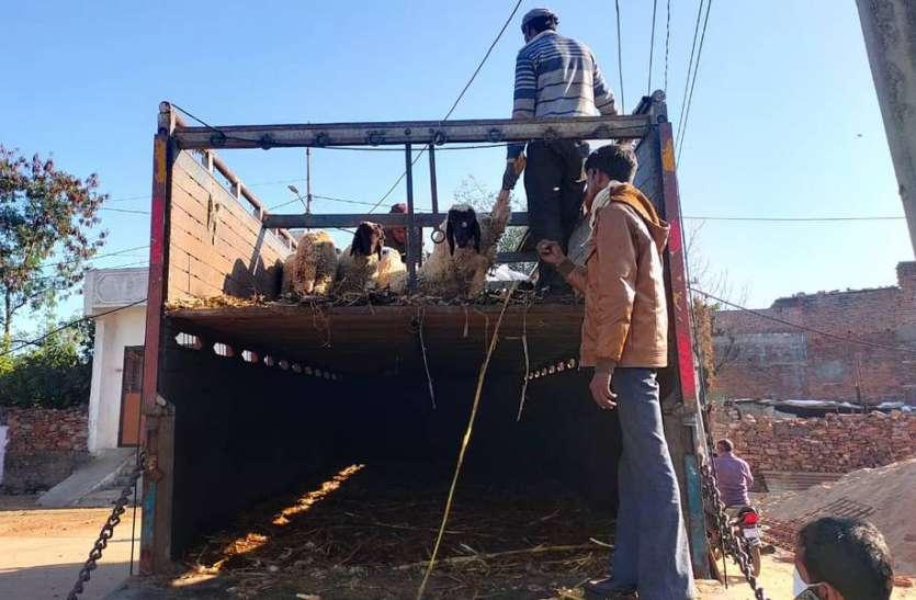 प्रतापगढ़ पुलिस ने भेड़-बकरियों से भरे 13 ट्रक पकड़े