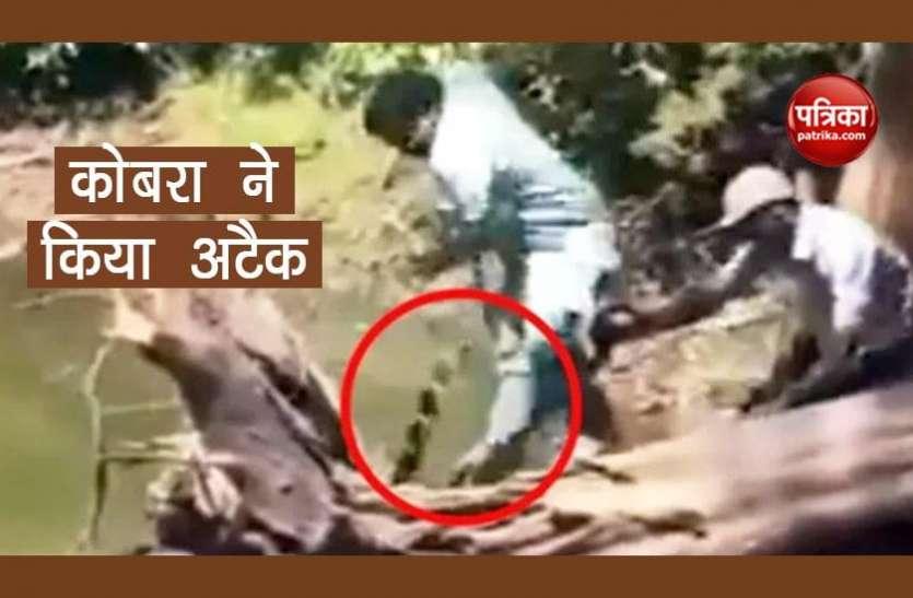 कोबरा को पकड़ने गया था एक्सपर्ट, अचानक कर दिया अटैक, देखें डरावना वीडियो
