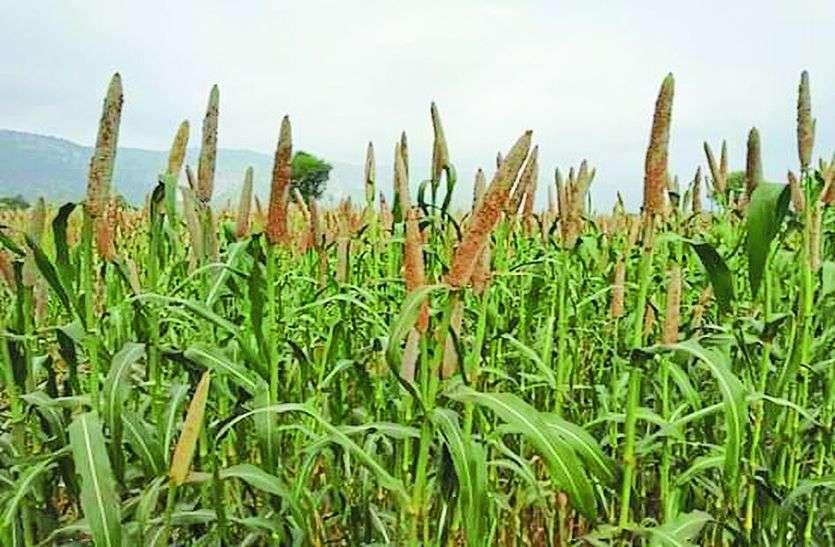 किसानों के लिए जरूरी खबर! मोटे अनाज के एक्सपोर्ट को लेकर सरकार ने उठाया बड़ा कदम