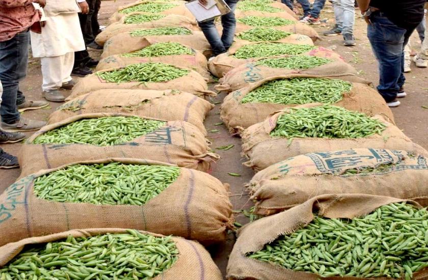 जापान और सिंगापुर में बढ़ी यहां के मटर की मांग, अब जबलपुर की मटर की होगी ग्लोबल ब्रॉण्डिंग