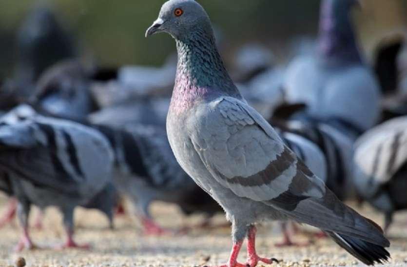 फिर दो कौओ की हुई मौत, अब तक 27 पक्षियों की हुई मौत