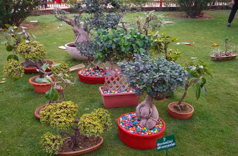 हैदराबाद: पूर्व डीजीपी के घर से नायाब पौधा चोरी, पुलिस ने पता लगाने को किया दिन-रात एक