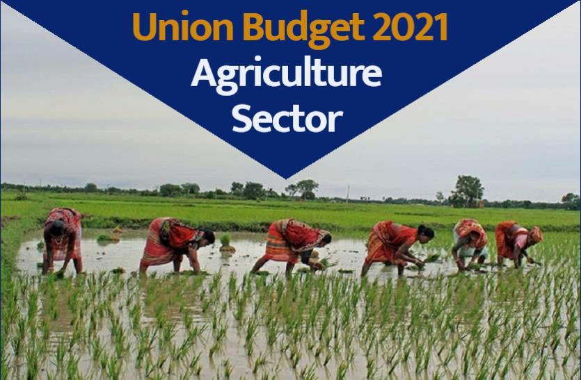 Budget 2021: किसानों को इस बार के बजट में कितना होगा फायदा, कृषि क्षेत्र के लिए क्या होंगी नई योजनाएं