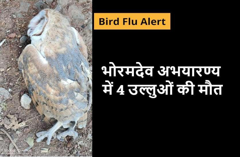 Bitrd Flu Alert: भोरमदेव अभयारण्य में 3 दिन में 4 उल्लुओं की मौत से हड़कंप, सैंपल भेजे भोपाल