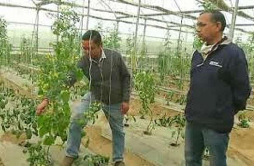 माइक्रोसॉफ्ट की नौकरी छाेड़ गांव की देशी जमीन में विदेशी सब्जी उगाकर लाखाें कमा रहे चाचा-भतीजे