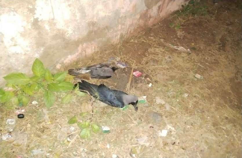 बर्ड फ्लू से प्रभावित आधा प्रदेश,अब तक 5759 पक्षियों की मौत