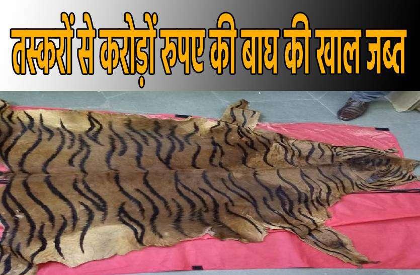 इंटरनेशनल बाजार में 2 करोड़ है बाघ की खाल की कीमत, 25 लाख में बेचने जा रहे थे तस्कर
