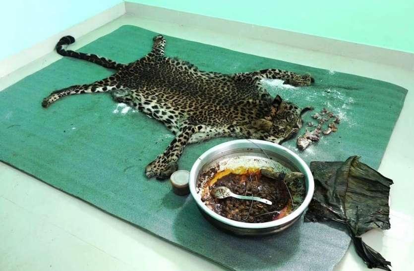 6 साल का तेंदुआ मारकर खा गए पांच लोग, नाखून और खाल बेचने का कर रहे थे जुगाड़
