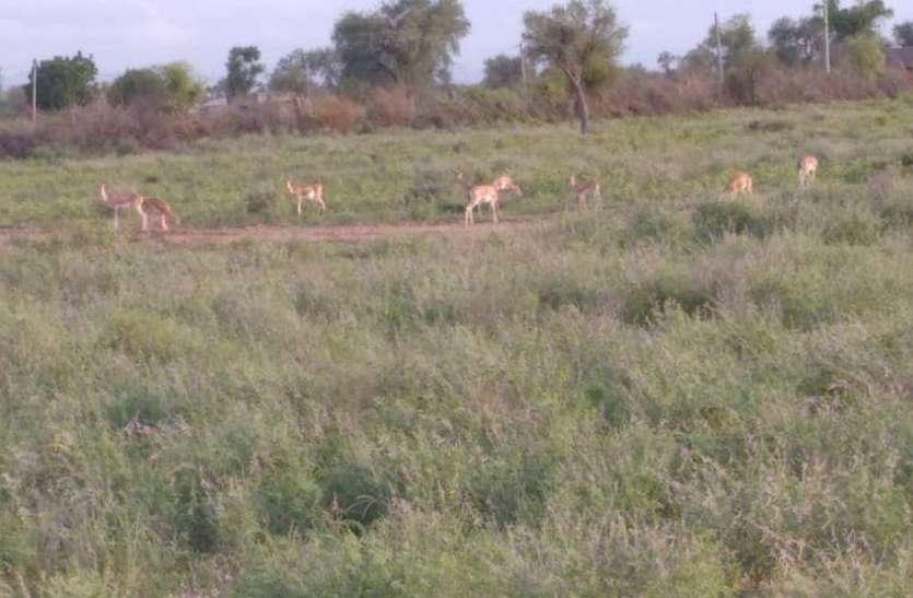 स्वछंद वन्य जीवों की नहीं सुरक्षा, रेस्क्यू सेंटर का अभाव