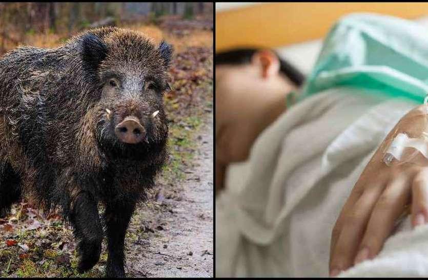 जंगली जानवर के हमले में दो बच्चे घायल