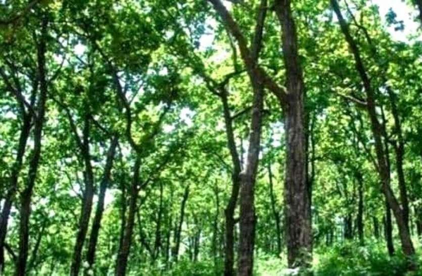 जंगल में केसर का छिड़काव कर सुरक्षा का लिया जिम्मा