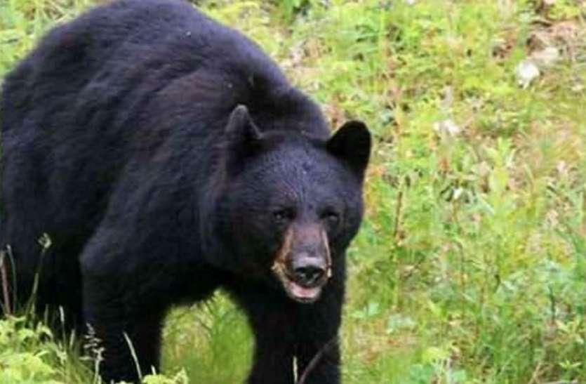 भालू ने महिलाओं पर किया हमला, एक की आंख निकाली तो दूसरे के पीठ वार किया