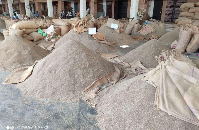 KRISHI MANDI --शनिवार को इस प्रकार रहे कृषि जिंसों के भाव
