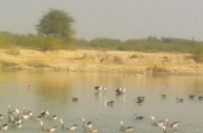 बर्ड फ्लू की आशंका के बीच प्रवासी पक्षी सुरक्षित