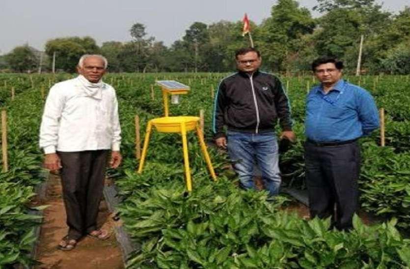 Ahmedabad  News : बेचरी के किसान ने मल्चिंग पद्धति से मिर्च की खेती की