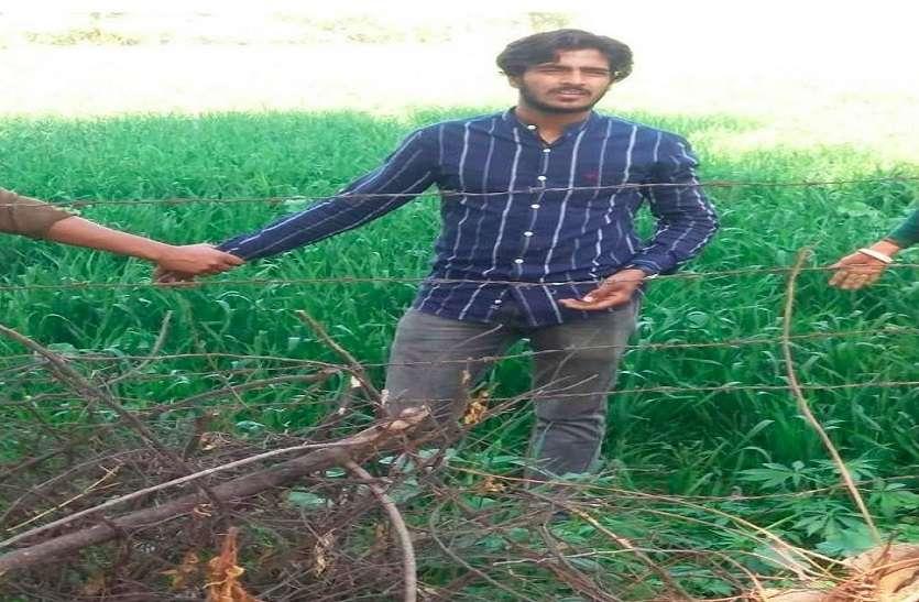गेहूं की फसल के बीच में उगा रखा था गांजा, आरोपी गिरफ्तार
