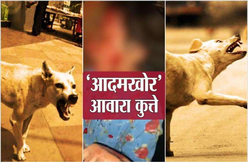 डेढ़ साल की बच्ची पर टूट पड़े आधा दर्जन आवारा कुत्ते, डॉक्टर भी नहीं बचा पाए