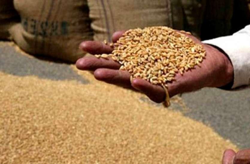 रबी फसल की बिक्री को 13 हजार से ज्यादा किसानों ने कराया रजिस्ट्रेशन
