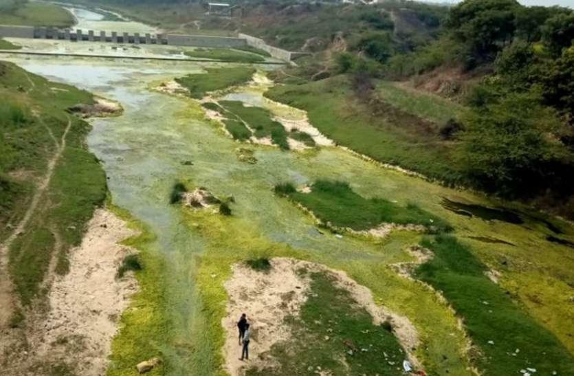 क्वारी नदी में धार टूटी, ठहरे पर काई जमने से नहीं दिखता पानी