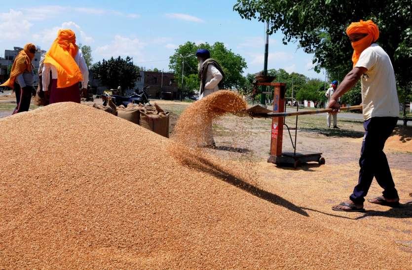 किसानों के प्रदर्शन के बावजूद गेहूं की नहीं होगी कमी, इस साल रिकॉर्ड उत्पादन का अनुमान