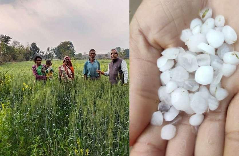 मावठा बना अन्नदाता के लिए अमृत, फसलों को मिली संजीवनी