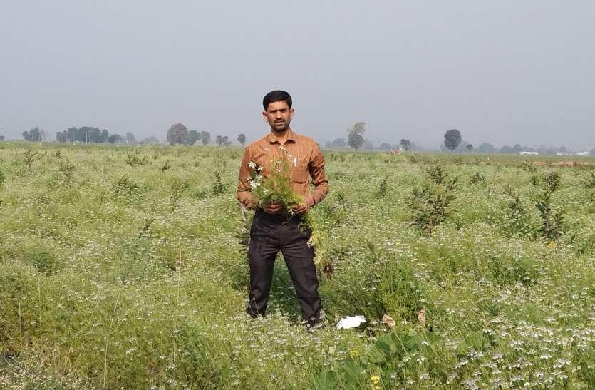 कठोरा में कलौंजी से महक उठेंगे खेत-खलिहान, होगा जोरदार उत्पादन