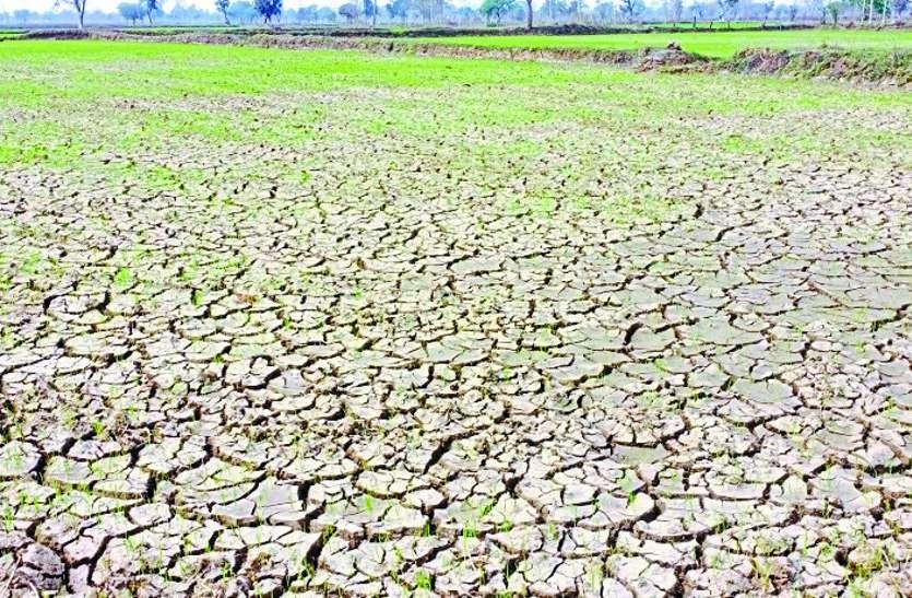 बालोद : फरवरी में ही जवाब देने लगे खेतों के बोर, हैंडपंप से भी निकल रही पतली धार, डबरी से हो रही सिंचाई