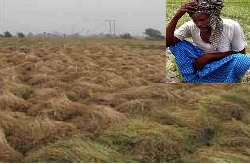 बारिश व ओला वृष्टि से किसानो के माथे पर शिकन