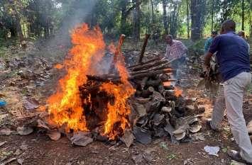 वन विभाग ने किया तेन्दुए का अंतिम संस्कार