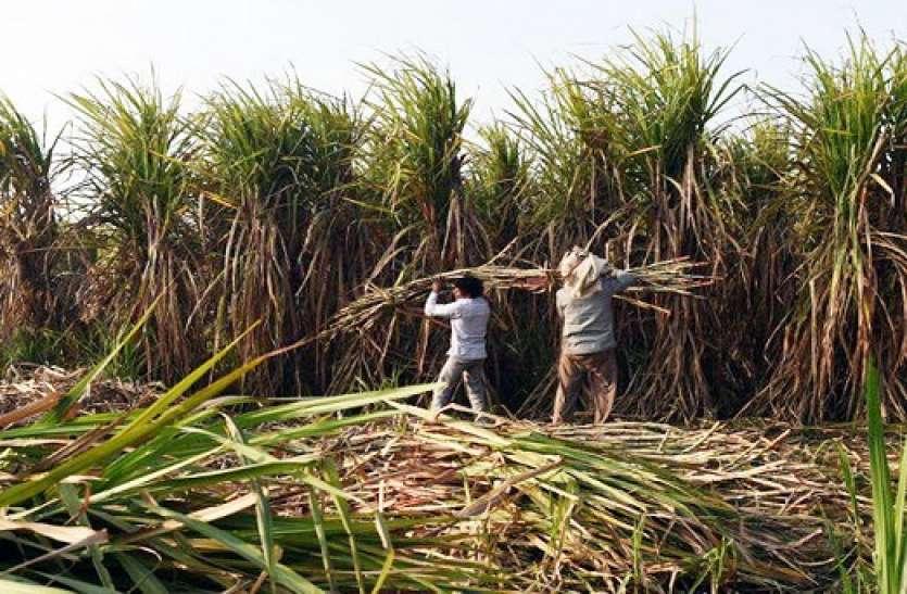 गन्ना किसानों का भुगतान नहीं करने वाली शुगर मिलों की खैर नहीं, डीएम ने दिए सख्त निर्देश