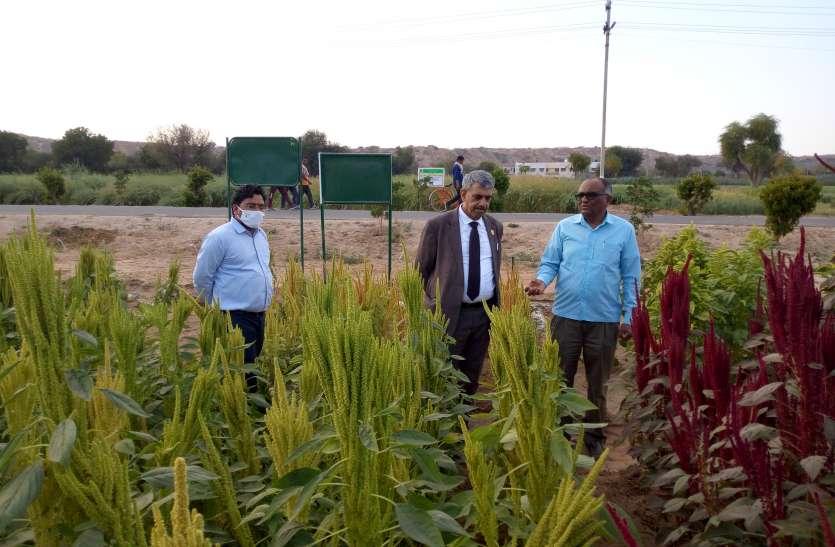 AGRI--सहायक महानिदेशक ने देखी अनुसंधान व बीज उत्पादन गतिविधियां