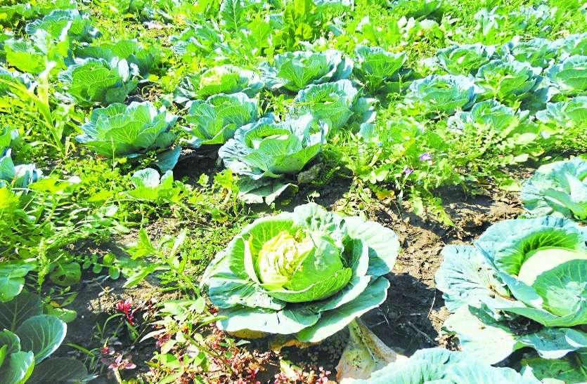तेज हवा और बारिश से सब्जी व रबी फसल को भारी नुकसान