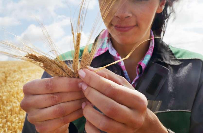 खिलाड़ी दर-दर भटक रहे, मैदान की भूमि पर कब्जा कर बोई गेहूं की फसल
