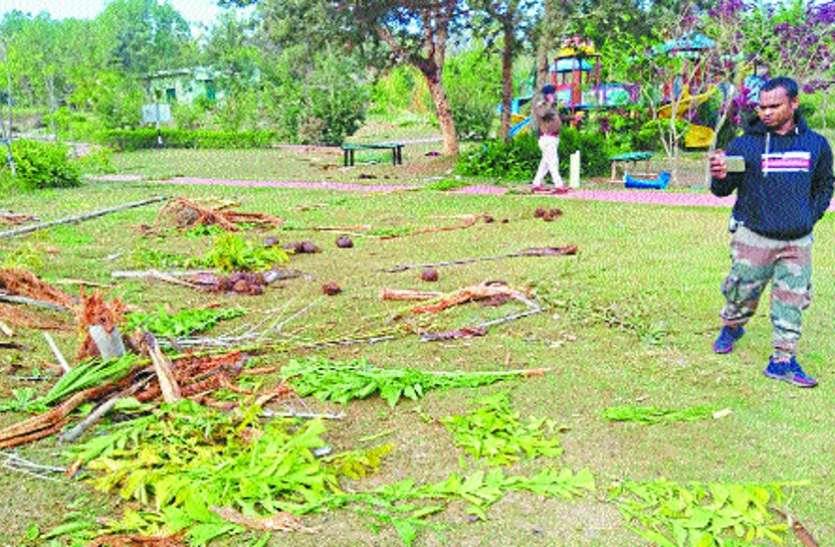 हाथियों ने गंगरेल डेम के गार्डन में मचाया उत्पात