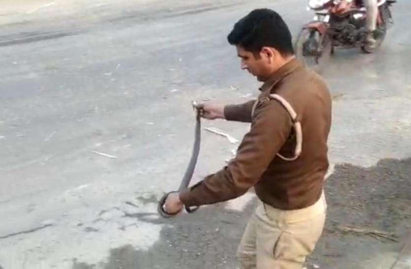 Good Work: कोबरा ने नेशनल हाइवे पर लगवा दिया लंबा जाम, सिपाही ने हाथों में ही उठा लिया सांप