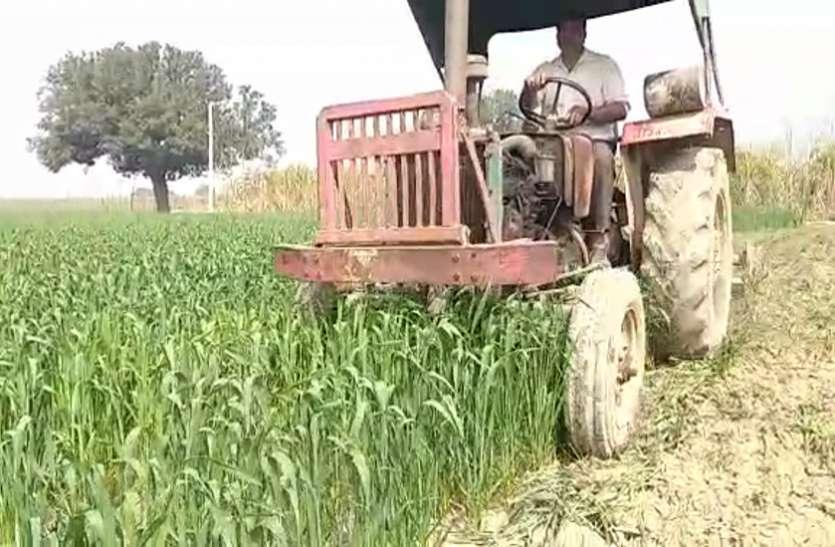 कृषि कानूनों के विरोध में किसान ने लहलहाती गेहूं की खड़ी फसल को ट्रैक्टर से किया तहस-नहस