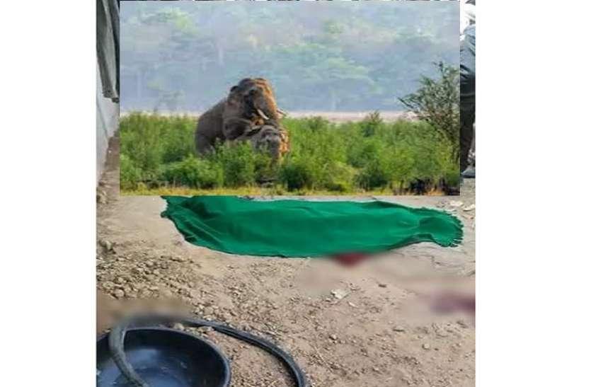 बस हादसे के बाद अब हाथियों का आतंक, इस परिवार पर टूटा कहर, कुचलने से तीन की मौत