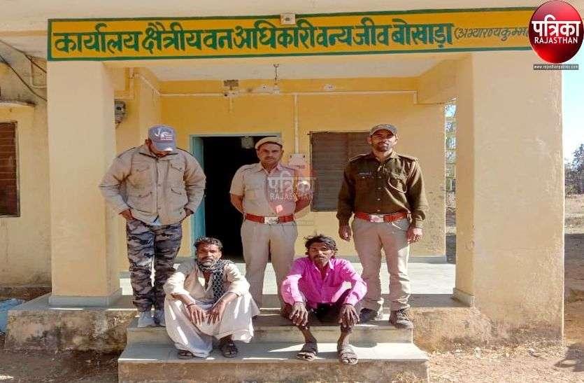 मारवाड़-मेवाड़ सीमा में सालर पेड़ों पर टैपिंग करते वन विभाग ने पकड़े दो सदिग्ध, पूछताछ जारी