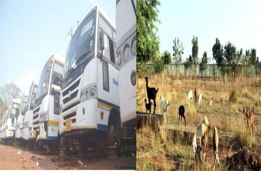 ढाई करोड़ का बस डिपो बना बकरियों का चारागाह, खुले मैदान में कंडम हो रही सिटी बसें, चक्के और पाट्र्स भी हो गए चोरी