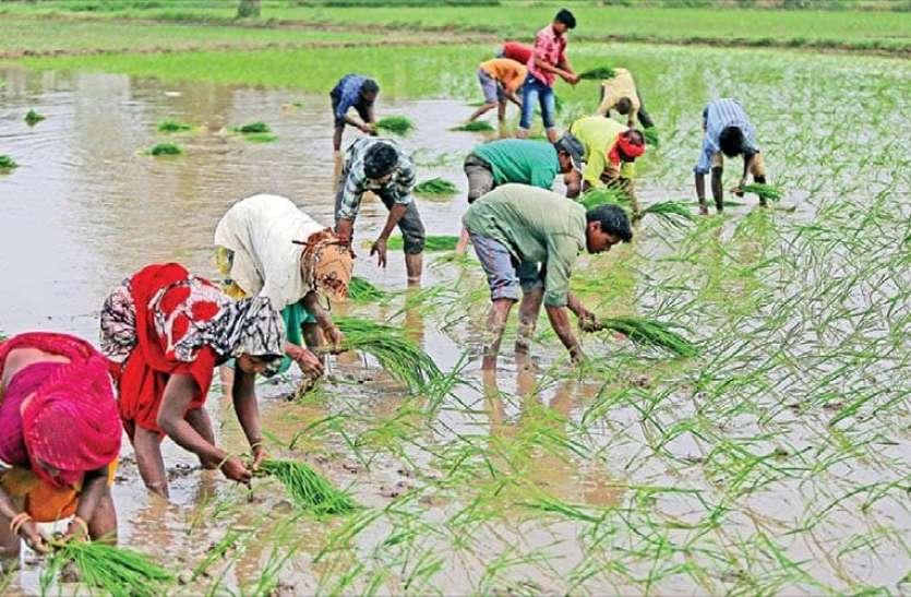 यह डिजिटल कार्ड किसानों की आमदनी में करेगा इजाफा, सिर्फ 250 रुपए करने होंगे खर्च