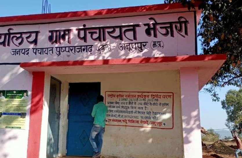 गांव के पांव: भेजरी धान के नाम पर पड़ा ग्राम पंचायत का नाम भेजरी