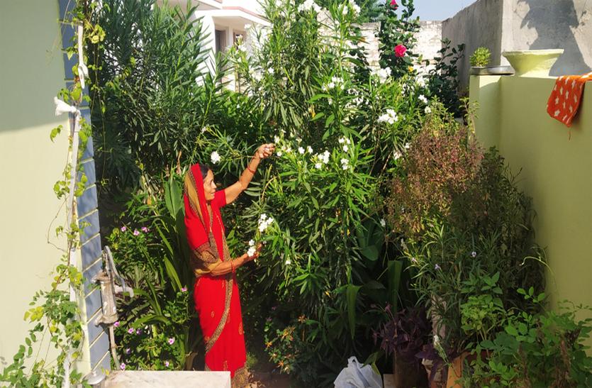 प्रदूषण के इस दौर में हर घर में तैयार की जा रही बागवानी