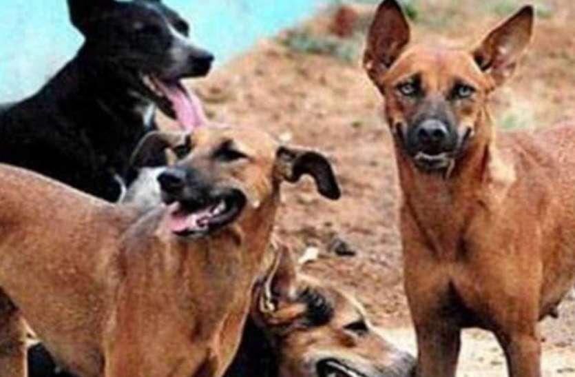 यूपी में एक और वायरस ने दी दस्तक, आंतें सड़ने से हुई कई जानवरों की मौत, बेहद खतरनाक है यह संक्रमण