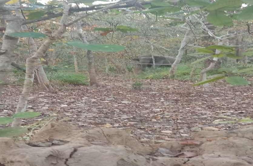 गरियाबंद परिक्षेत्र में हाथियों का दल फिर पहुंचा, धान की फसल को रौंदा