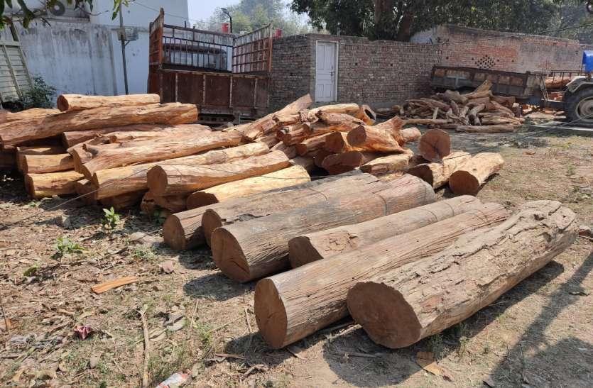 बेशकीमती लकड़ियों के साथ दो ट्रैक्टर ट्रॉली बरामद, पांच के खिलाफ मुकदमा दर्ज