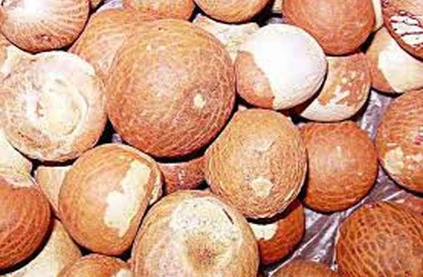 सुपारी मेंं लगा रोग, 5,588 किसानों को नुकसान