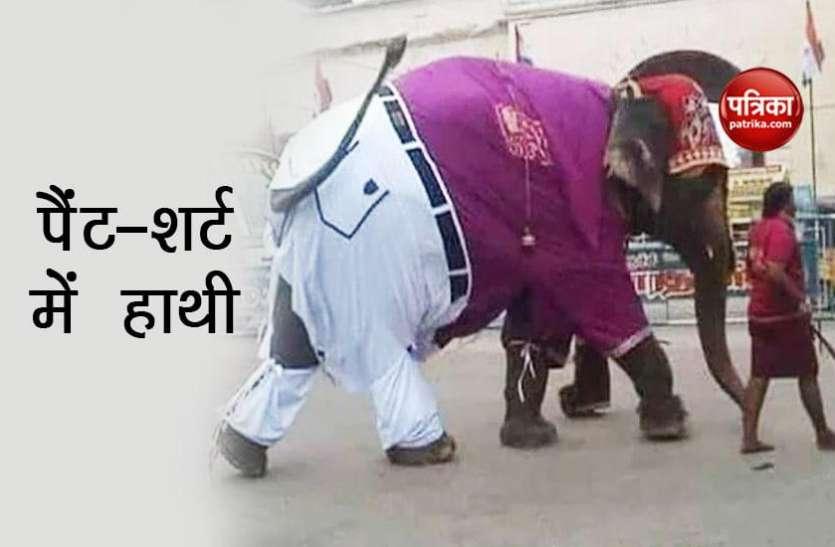 पैंट-शर्ट पहन सड़क पर निकला हाथी राजा, फटी जींस के कारण हो गया ट्रोल