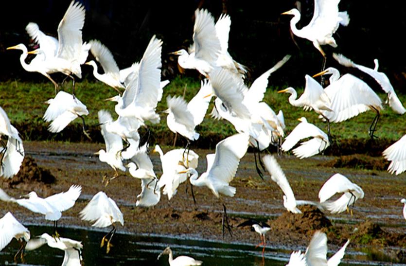 ट्रैवलॉग : प्रकृति प्रेमियों का स्वर्ग पक्षीपथलम