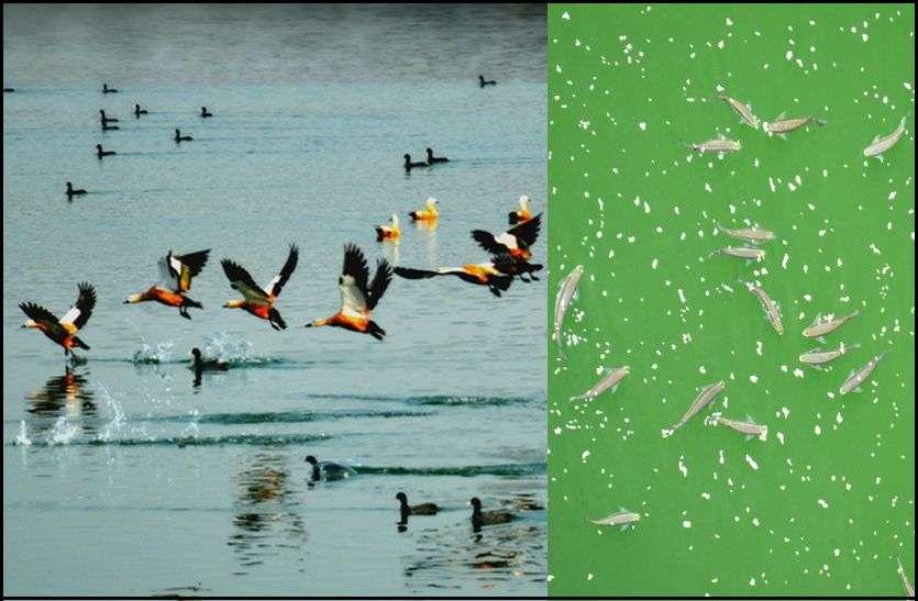 पक्षी और मछलियों की अठखेलियां कर रही आनंदित